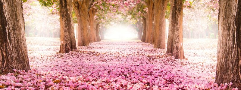 Pink-indus-flowers-path-trees-beautiful-scenery_1920x1440