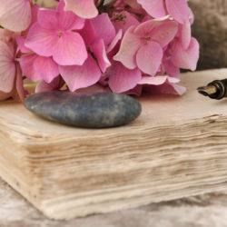 fleur d'hortensia sur vieux papier avec stylo plume